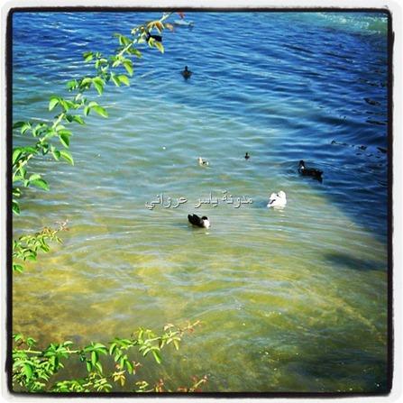 نهر العاصي,