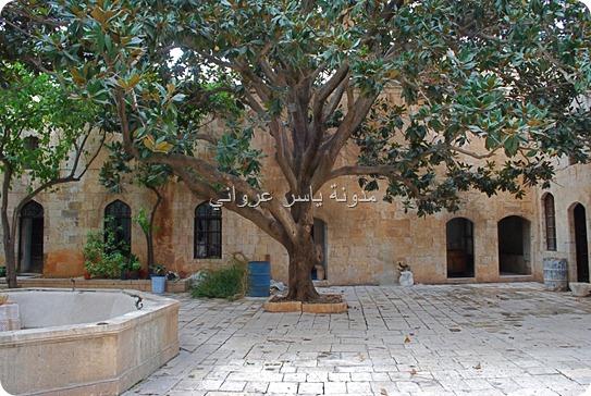 شجرة المانوليا بقصر العظم حماة