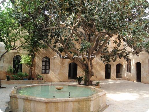 شجرة المانوليا بقصر العظم في مدينة حماة