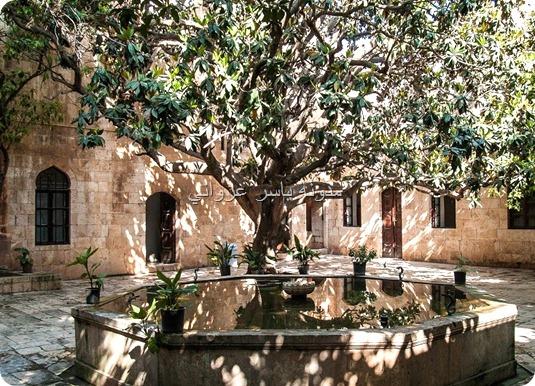 شجرة المانوليا حماة