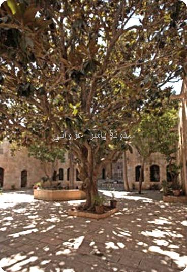 شجرة المانوليا قصر العظم حماه