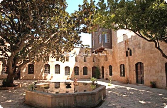شجرة المانوليا مدينة حماة