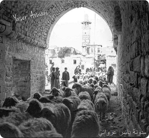 قبوة الكيلانية في مدينة حماة 1945م